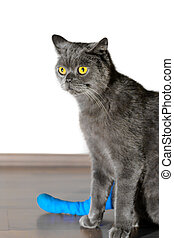 Cat with broken leg - Ill British Shorthair cat wih broken...