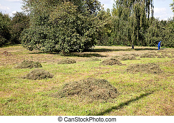 Haymaking - Cleaning up of the mowed grass is in the Moscow...
