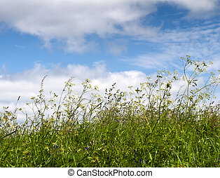 Flowers and grass in the meadow