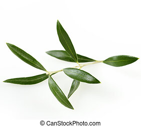 Green  Olive Branch With  Leaves On White Background