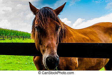 Horse on a farm in Southern York County, Pennsylvania.