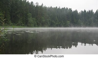 foggy lake - foggy forest lake by cold summer morning