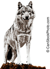 wolf painting - gray wolf  look the landscape