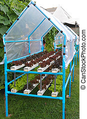 Growing hydroponic vegetables - Hydroponics grow vegetables...