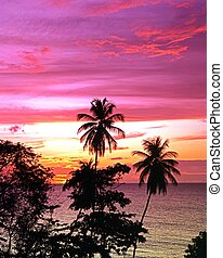 Palm trees at sunset, Tobago. - Palm Trees at sunset,...
