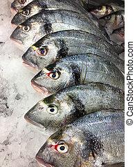 Fish market - Fresh fish on display laid on ice platform