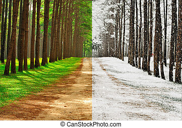 A pine forest taken in the morning at thailand - Season...