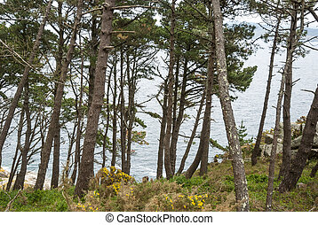 Forest at Cies island natural park, Galicia - Forest above...