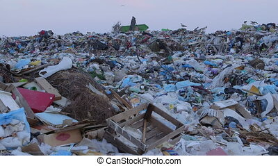 DOLLY: Heaps of garbage in landfill - Heaps of garbage in...