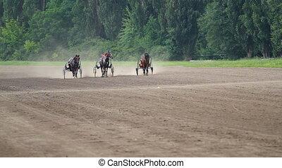 Running horses  on hippodrome
