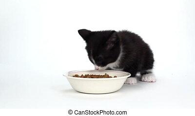 Cute tuxedo kitten eating food - Cute black and white kitten...