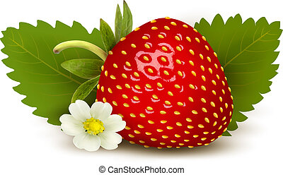 Ripe sweet strawberry and flower with leaves. Vector.