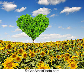 tree from the shape heart - sunflower field with tree from...