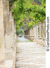 Walkway under a trellised vine - Paved stone walkway under a...