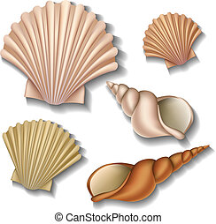 Shell set - Realistic Shell set isolated on white