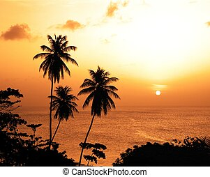 Palm trees at sunset, Tobago. - Great Courland bay at...