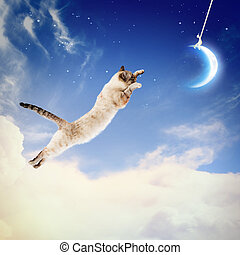 Cat catching moon - Image of cat in jump catching moon
