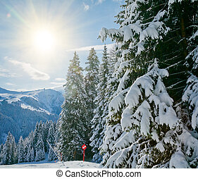 Fir trees on a mountain slope - Sunny day at Val Di Fassa...