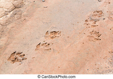 The dogs tracks - Close up the dogs tracks on wet sand after...