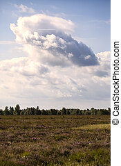 Bog - Cloud - Bog with big cloud - Dosenmoor in...