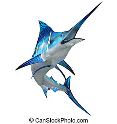 Marlin Fish on White - The Blue Marlin is a popular big game...