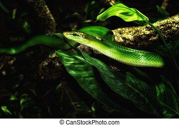 verde, serpiente