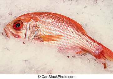 Red Snapper - Fresh red snapper lies on a bed of ice at the...