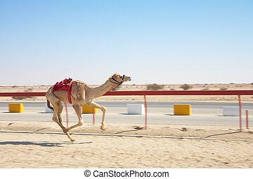 robot, camello, carreras