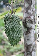verde, Textured, guanabana, fruta, árbol