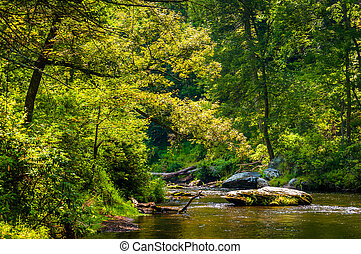 Beautiful stream scene along Gunpowder Falls in Baltimore...