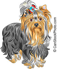 vector cute pedigreed dog Yorkshire terrier - color sketch...