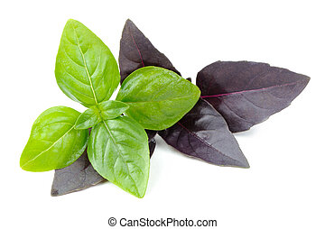 Green and Purple Basil Herb Isolated on White Background -...