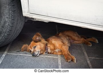 Dog Lying in the shadow of the car - mongrel dog with cools...