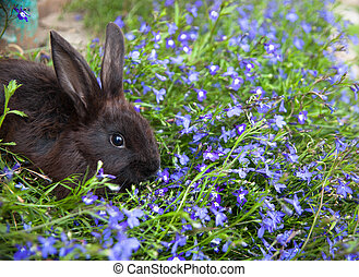 Rabbit on the grass - Rabbit bunny cute on the grass...