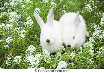 Rabbits bunny cute on the grass outdoors