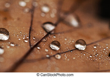 Fallen leaves covered with raindrops - Dewdrops on the dry...