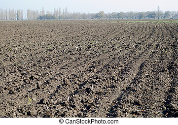 cropland - view on the fallow black field