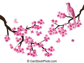 cherry - vector cherry blossom with bird