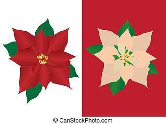 poinsettia - vector two Christmas poinsettias