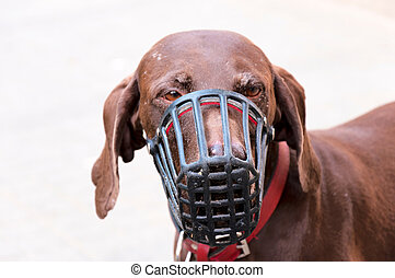 Sad dog with protection mask