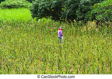 Gardener. - Farmers are harvesting in the fields.