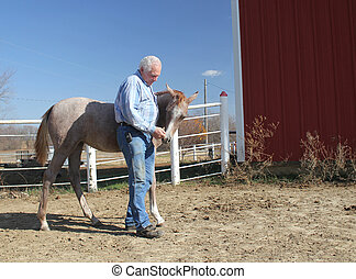 Man petting young horse - Middle-aged man petting a young...