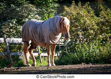 Clothed Horse - Horse clad in the warp and standing behind a...