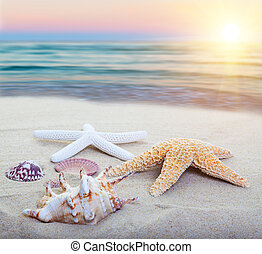 Sea Shore - Assorted starfish and sea shells on a beach,...