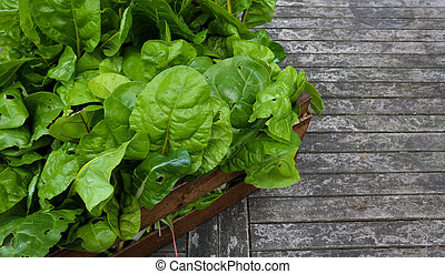 A Crate Of Organic Grown Rainbow Chard - A crate full of...