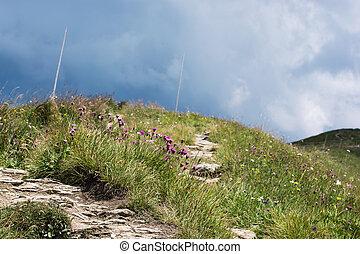 montagne, fiori, sentiero