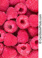 Raspberries - Background of fresh raspberries