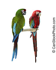 Colorful Macaw Parrots Isolated On White