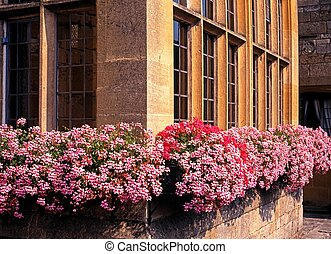 Cotswold window boxes, Broadway - Colourful window box under...
