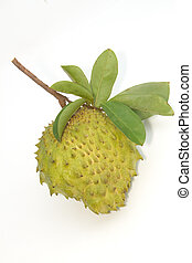 Soursop, Prickly Custard Apple fruit Annona muricata L